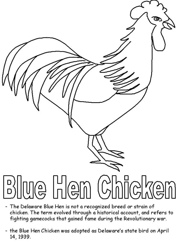 Blue Hen Chicken Coloring Page Blue Hen Chicken Coloring Page
