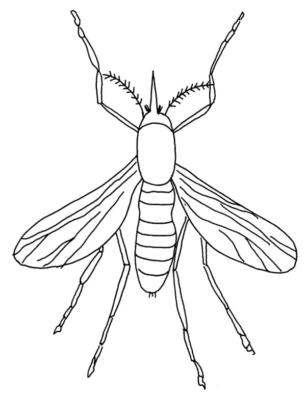 mosquito insect coloring page mosquito insect coloring page