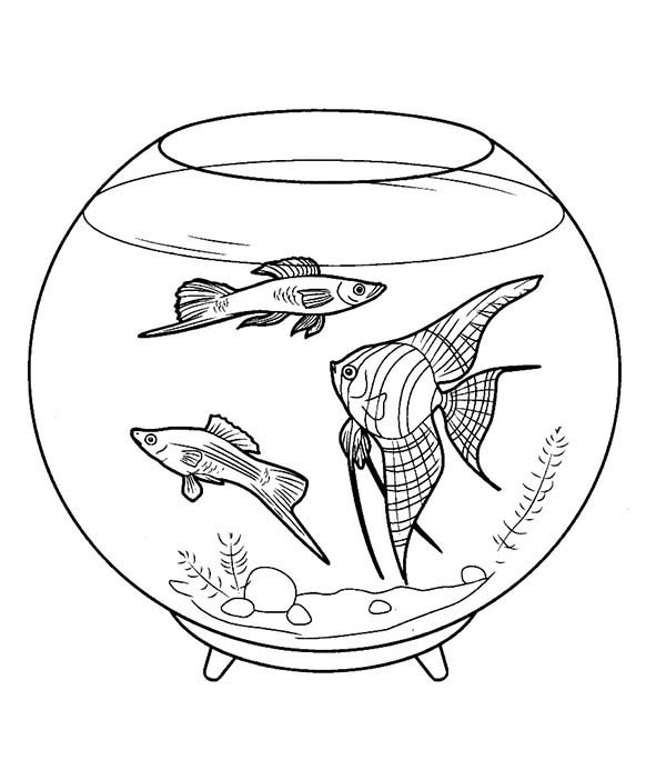 Pet Fish In A Bowl Coloring Page