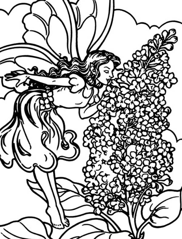 A Little Fairy Smelling Lilac Flower Coloring Page ...