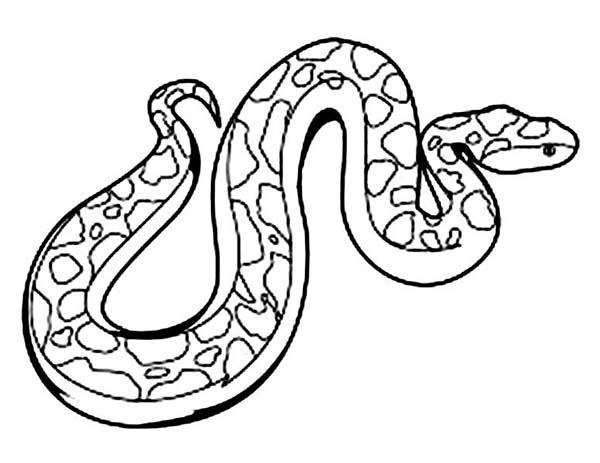 Anaconda coloring page for kids