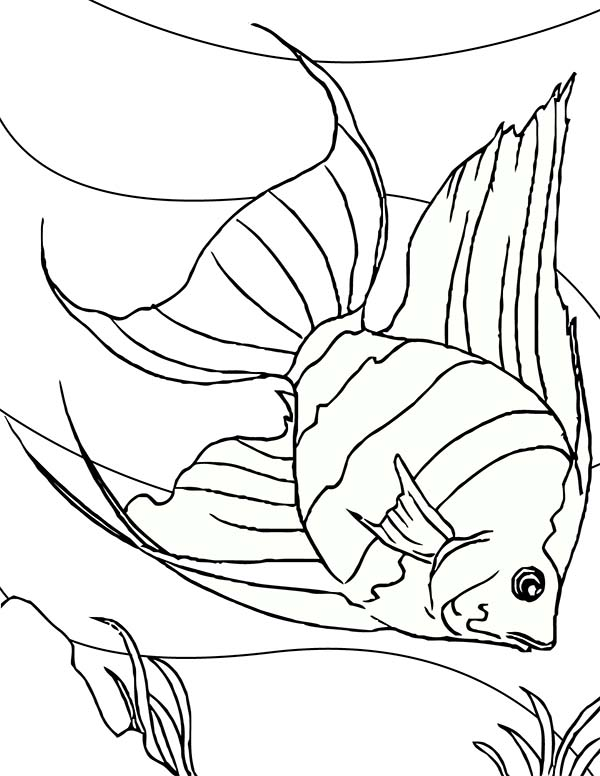 Angel Fish Dive Into Sea Floor Coloring Page