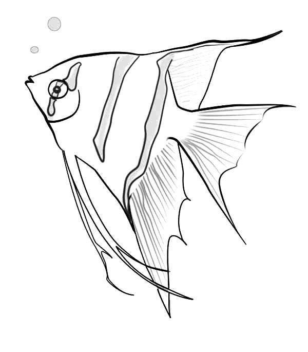 Angel Fish Sketch Coloring Page