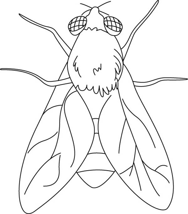 flying animal coloring pages - photo#20