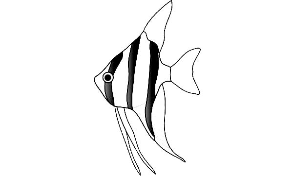 Awesome Angel Fish Coloring Page