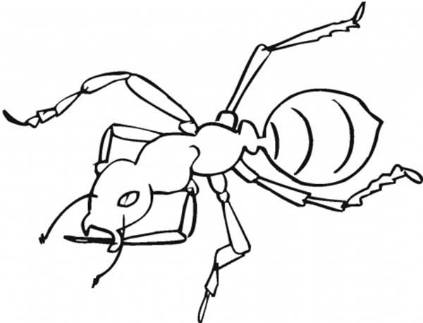 awesome worker ant coloring page - Ant Coloring Pages