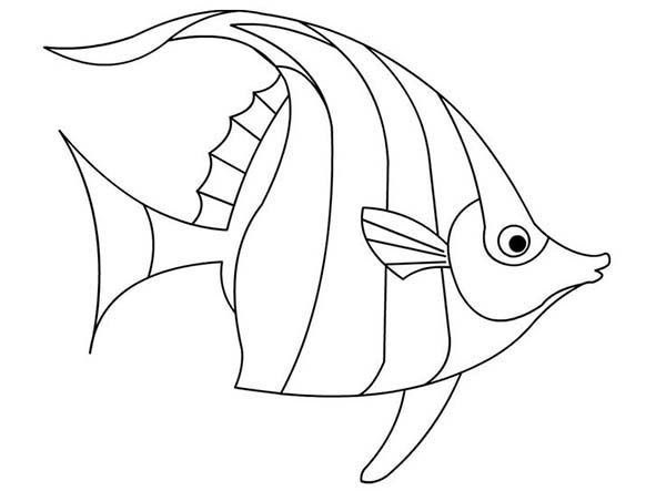 Angelfish Outline Pictures To Pin On Pinterest