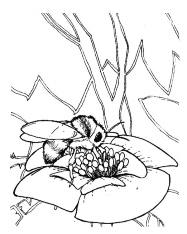 Honey Bee Eat From Flower To Make Coloring Page