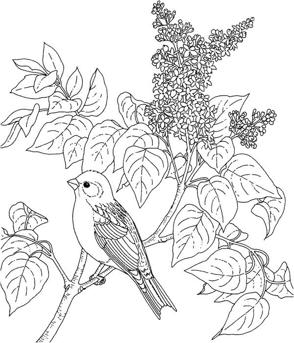 Bird and Lilac Flower Coloring
