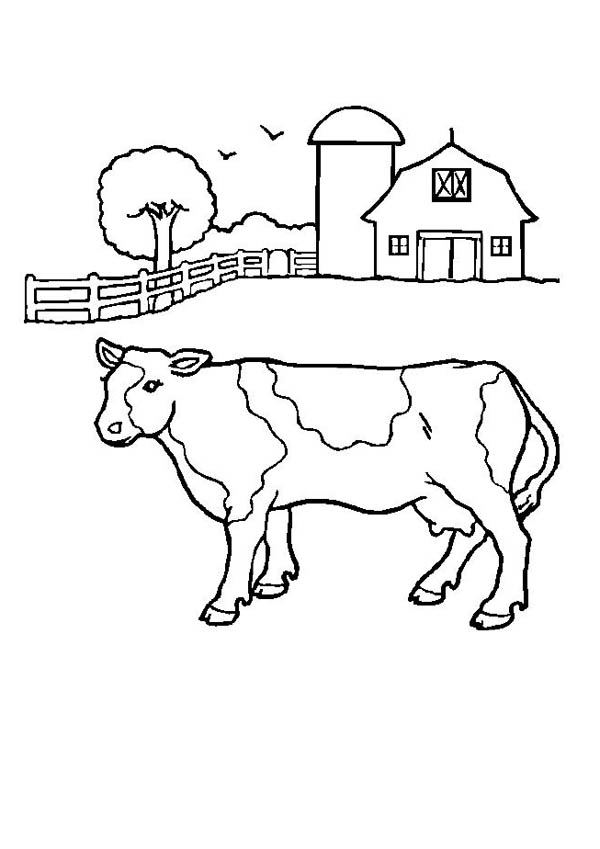 Cow Farm For Milk Production Coloring Page