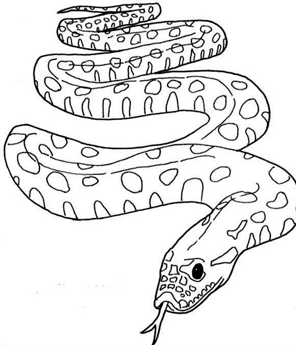 Famous Snake from Amazon Anaconda Coloring Page | Coloring Sky