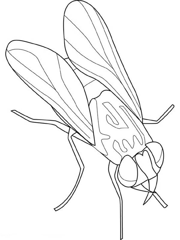 fly bring disease coloring page