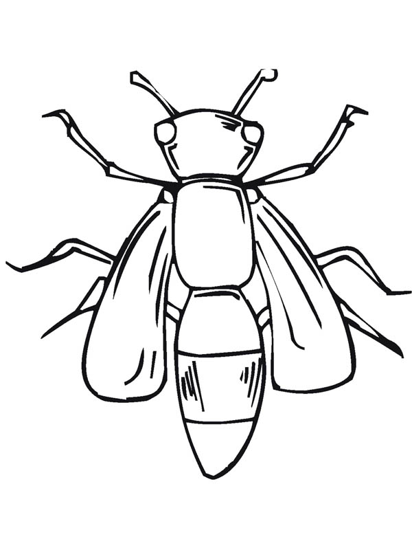 Giant Fly Insect Coloring Page | Coloring Sky