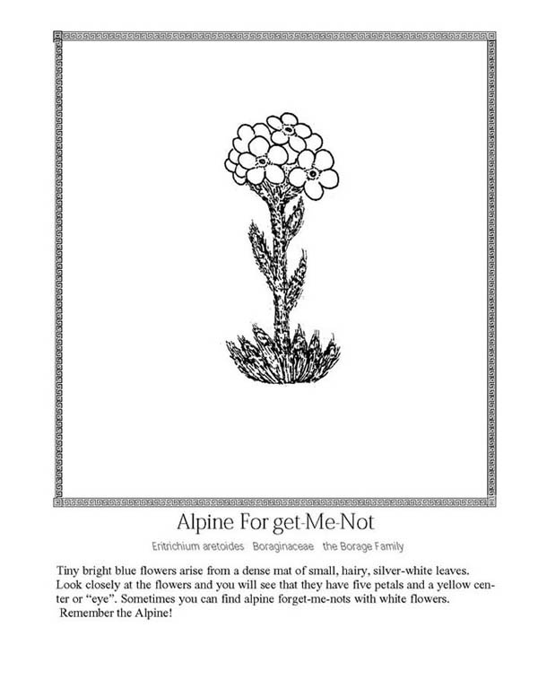 Growing Plants Alpine Forget Me Not Coloring Page