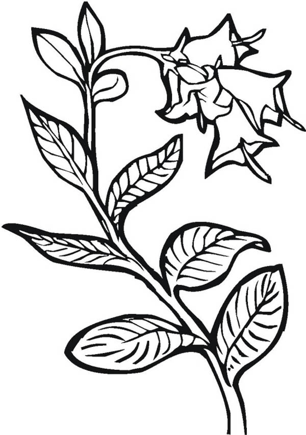coloring pages seeds and plants - photo #25
