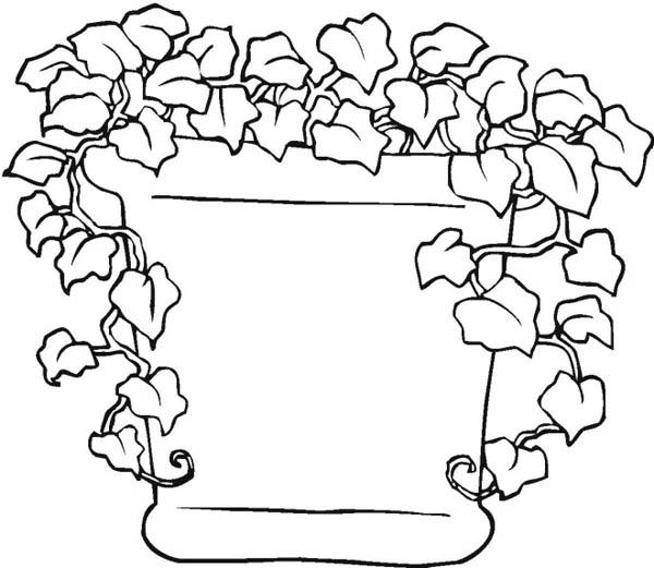 garden bean seed diagram
