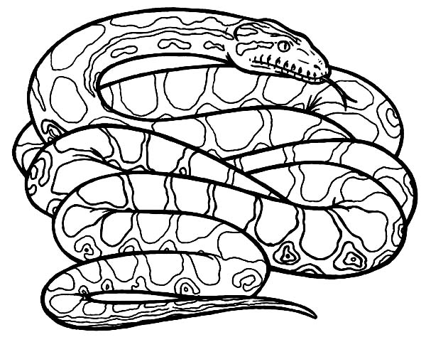 How to Draw Anaconda Snake Coloring Page | Coloring Sky