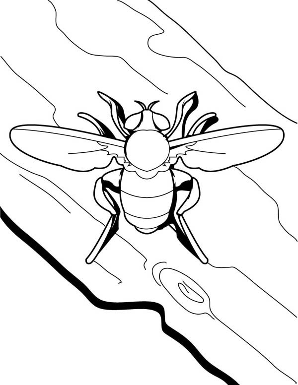 insect fly coloring page