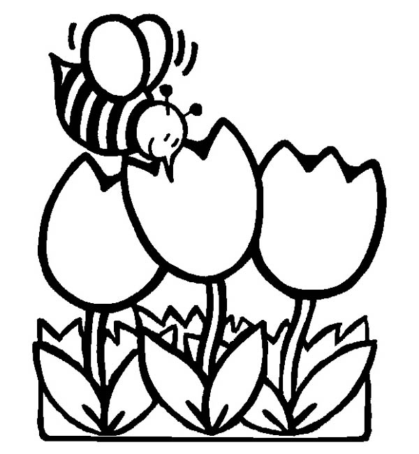 kindergarten drawing tulips and bee coloring page