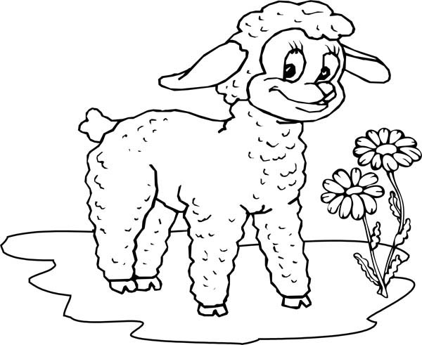 Little Lamb Like Beautiful Flower Coloring Page