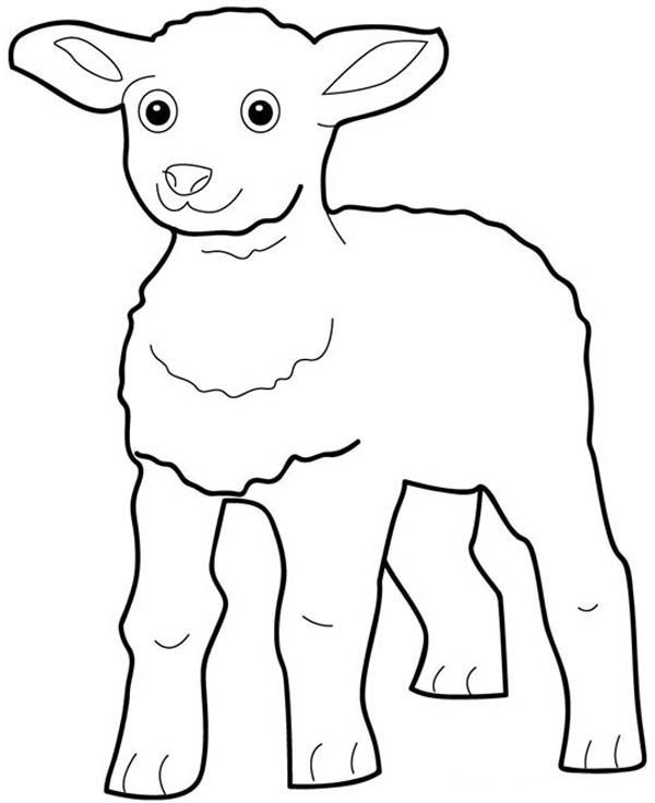 Little Lamb Look Excited Coloring Page