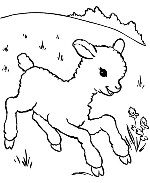 Little Lamb Running Aroung Coloring Page | Coloring Sky