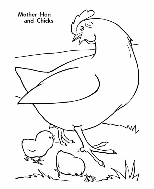 Mother Hen and Chicks Coloring Page Coloring Sky