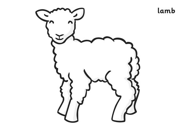 Spring Lamb Coloring Page | Coloring Sky