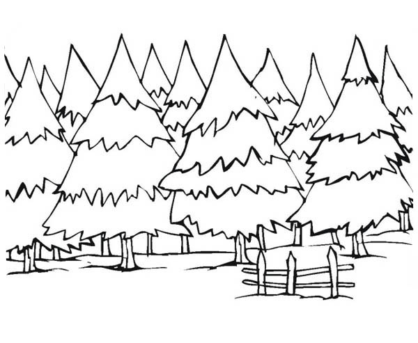Forest Pine Tree In Canada Coloring Page