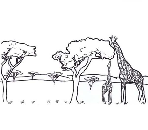 Safari Animals Coloring Pages: African Safari With Giraffe Coloring Page: African Safari