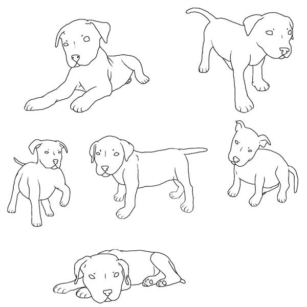 pit bulls coloring pages - photo#15
