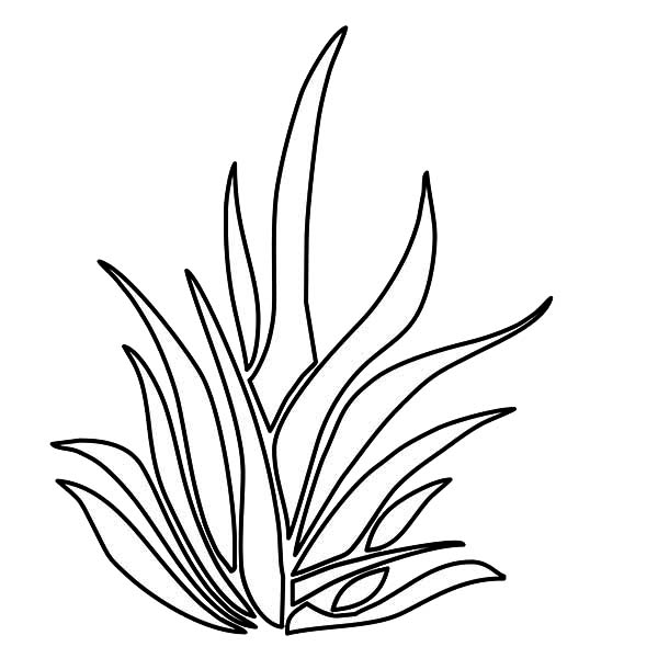 Grass Growing Thrives Plants Coloring Page