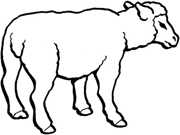 Line Drawing Sheep : Sheep face coloring page