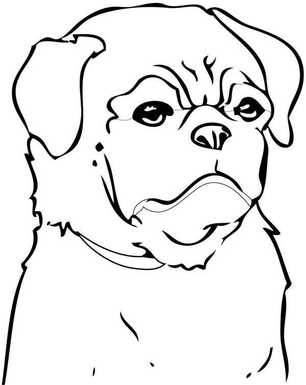 Man in Black Pitbull Coloring Page | Coloring Sky