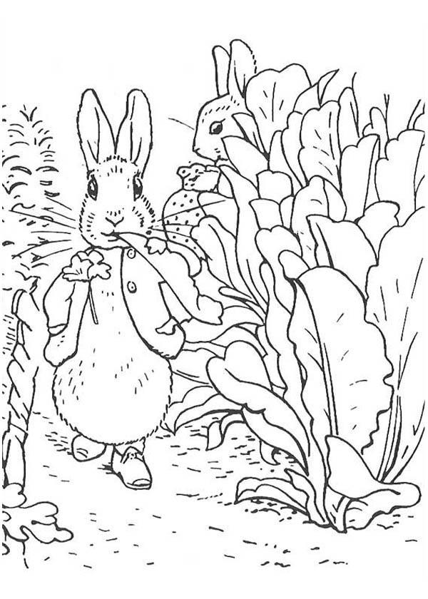 Peter Rabbit Walking at Radish Garden Coloring Page | Coloring Sky