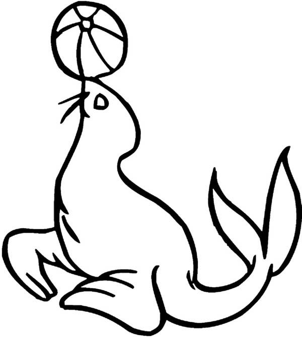 Picture of circus seal coloring page coloring sky for Circus seal coloring page