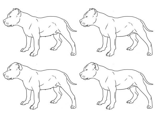 Pitbull fine art coloring page coloring sky for Fine art coloring pages