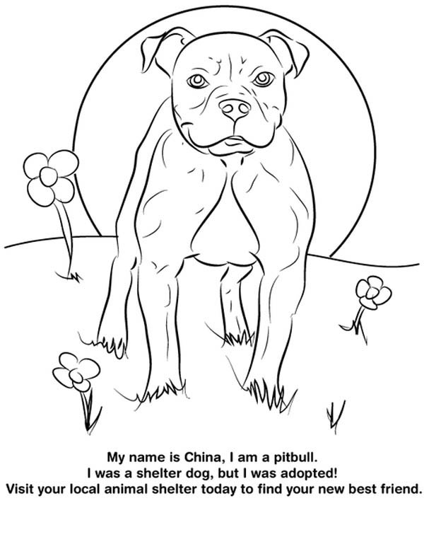 Pitbull From Shelter Dog Coloring Page
