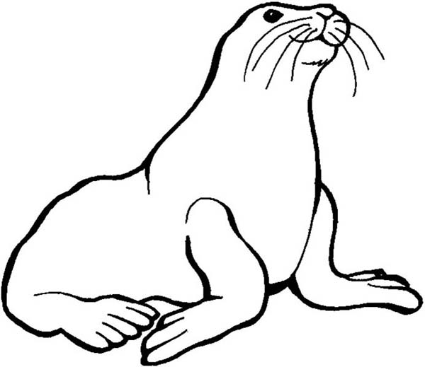 Preschool Kids Love Animal Seal Coloring Page