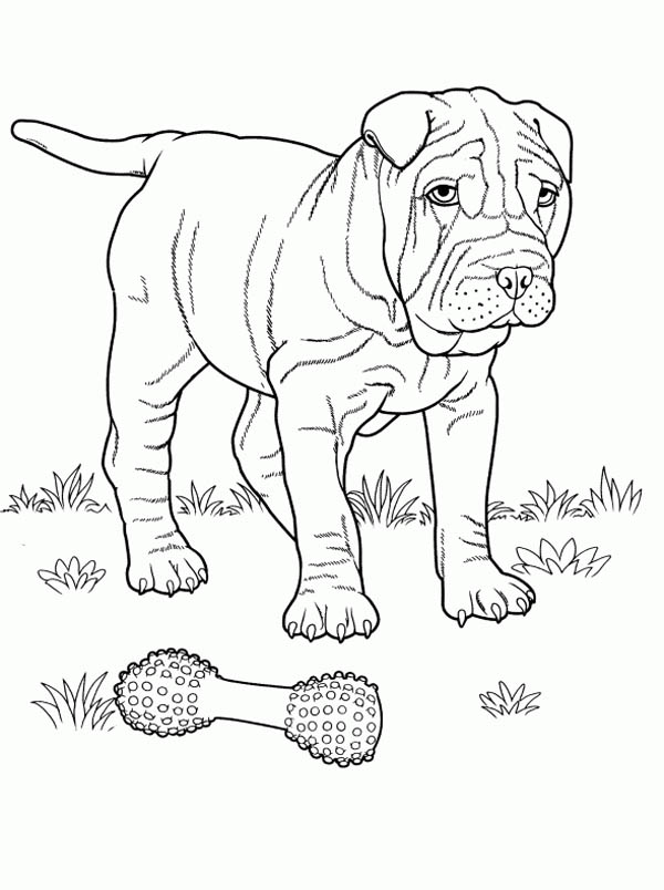 rottweiler coloring pages - excellent rottweiler coloring pages printable with and