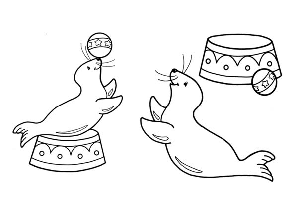 harbor seal coloring pages - photo#17