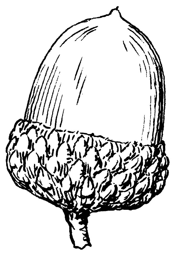 acorn coloring pages for kids - Squirrel Acorn Coloring Page