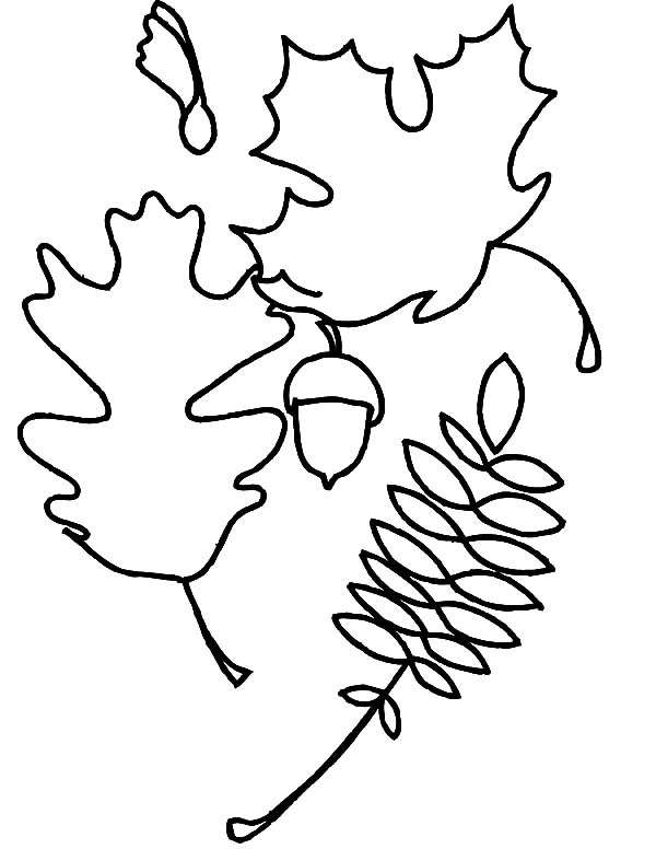 Acorn outline coloring pages acorn outline coloring pages for Acorn coloring page