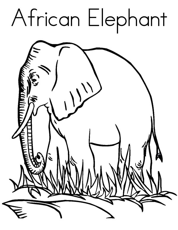 African Elephant Coloring Pages Coloring Sky