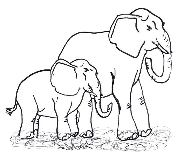 Elephants In Water Coloring Pages