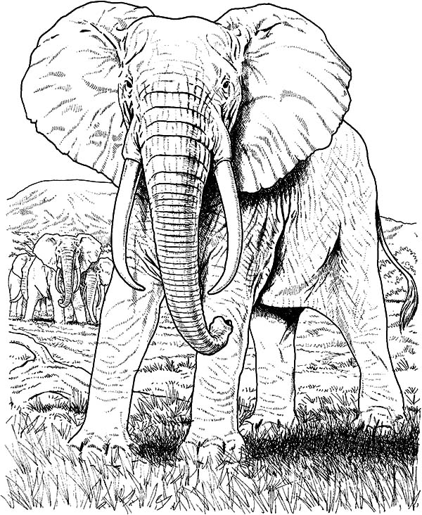 Elephant Color Pages Baby Animals Online Coloring Pages Page With