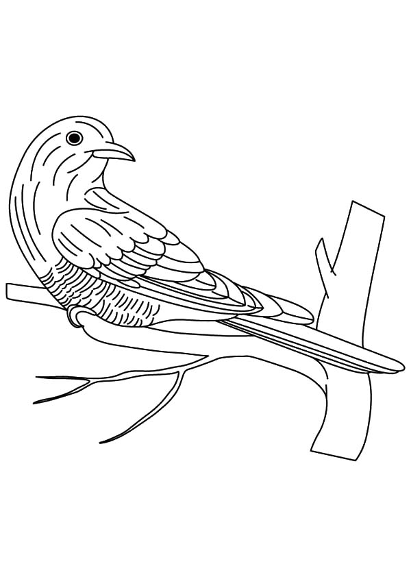Asian Emerald Cuckoo Bird Coloring Pages