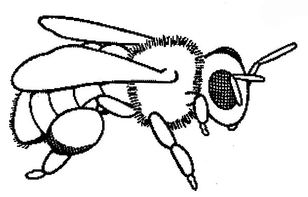 Baby Honey Bee Coloring Pages