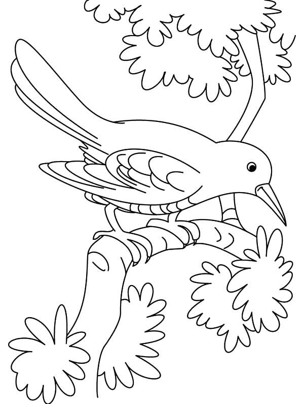 Cuckoo Bird Looking For Insect Coloring Pages