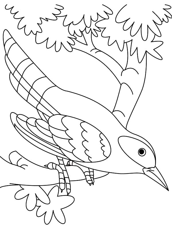 Cuckoo Bird Is Hungry Coloring Pages